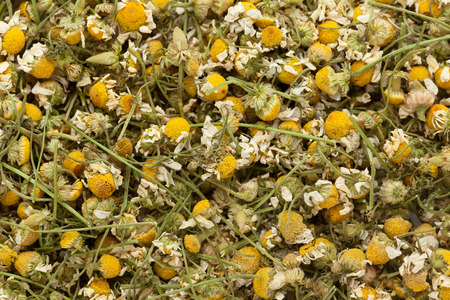 matricaria recutita: Organic German chamomile (Matricaria chamomilla) flowers. Macro close up background texture. Top view. Stock Photo