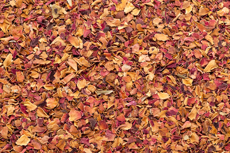 rosa: Organic dry rose petals (Rosa x centifolia). Macro close up background texture. Top view. Stock Photo