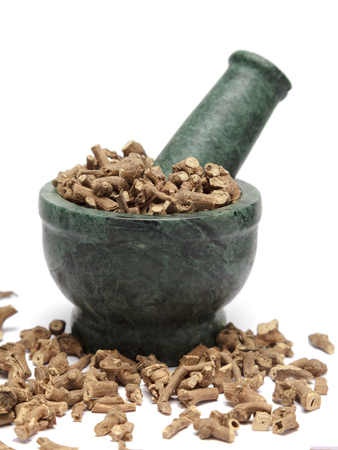 piperaceae: Organic Long pepper Dried roots (Piper longum) on marble pestle and over white background