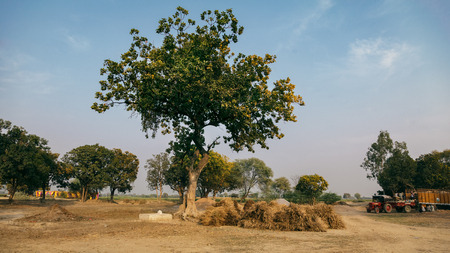 indian village: Green trees in an Indian Village. As on Date 5 March 2016, Kalpi, Uttar Pradesh (India).