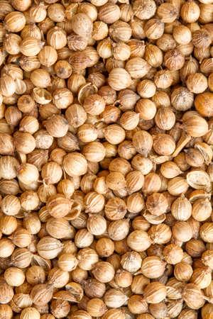 coriander seeds: Background of dried coriander seeds