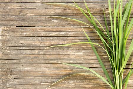 bambu: Hojas del bambú en el suelo