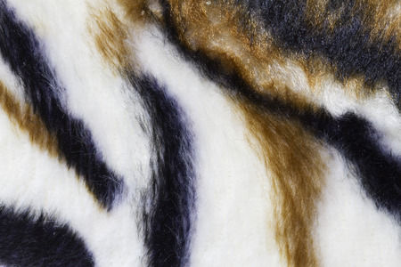 tiger skin: close up tiger skin texture