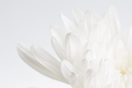 White flower closeup