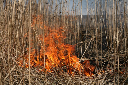 uncontrolled: Burning grass in the field Stock Photo