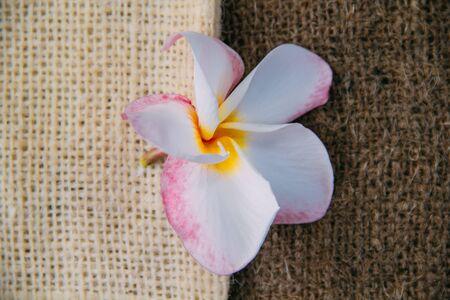 hanf: Hanfsack mit Plumeria (Frangipani)