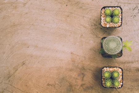 cactus plants and copy space, soft focus - vintage filter