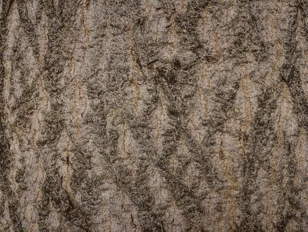 bark tree texture in blurred