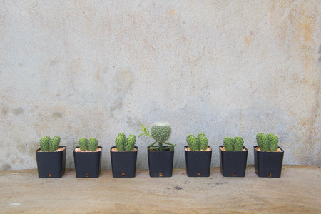 cactus plants and copy space