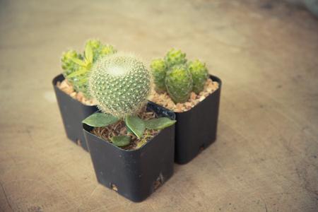 cactus plants and copy space, soft focus - vintage style