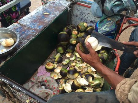 cutting Toddy palm, Sugar palm, Palmyra palm