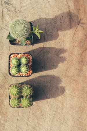 group of plants: group of cactus plants and copy space, vintage style Stock Photo