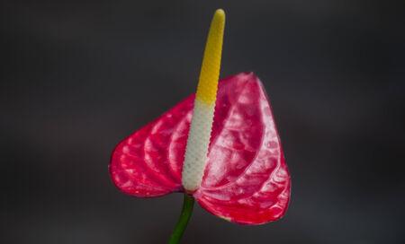 spadix: Happiness like Flower  spadix