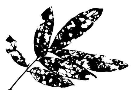 isolated leaf photo