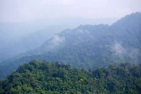 aerial view of plentifully  tropical rain forest in Thiland