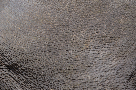 human skin texture: life elephant skin texture and background Stock Photo