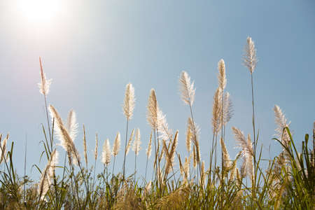 the thicket: sunshine to thicket flower and blue sky background