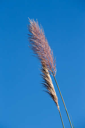 the thicket: thicket flower and blue sky background