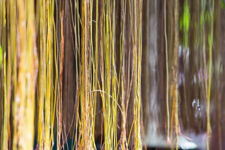 aerial roots: plant aerial root wall texture and background