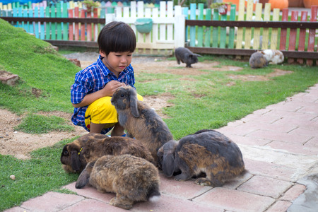 4 years happy adorable asian kid play with group of brown rabbits with copy space