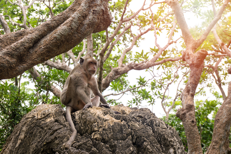 single monkey sit on rock in Thailand tropical forest with flare and copy space