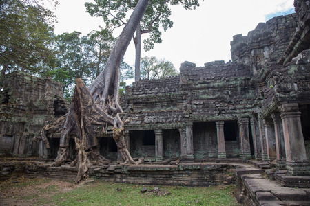 Big tree root combine with ancient stone balcony at Preah Khan the stone temple in Angkor  , Siem Reap , Cambodia Imagens - 106384154