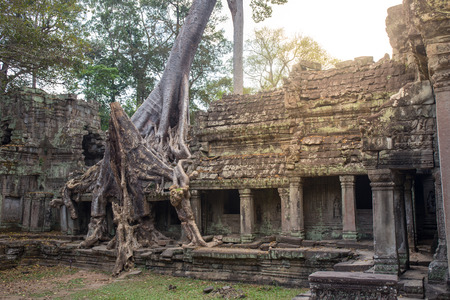 Big tree root combine with ancient stone balcony at Preah Khan the stone temple in  , Siem Reap , Cambodia