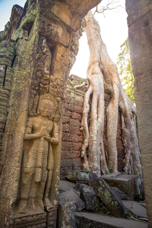 carving of giant for entrance guard with tree root on wall background at Preah Khan the stone temple in Angkor  Siem Reap , Cambodia