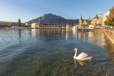 Lucerne, Switzerland - October 1, 2019 - White swan on clear Luzern lake in front of Seebruck bridge and historical building and mount pilatus background. Lucerne is the most travel destination in Switzerland. Imagens - 142095979
