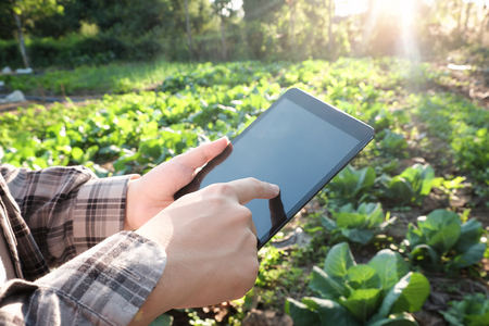 Farmer using digital tablet computer in cultivated agriculture Field, modern technology application in agricultural growing activity, selective focus and vintage tone.