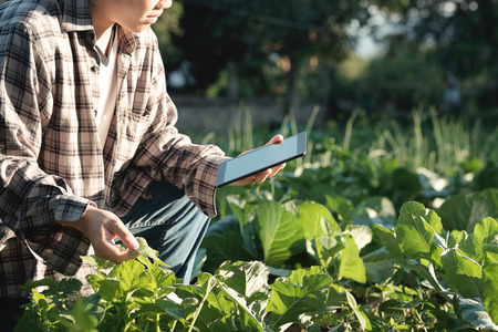 Agronomist Using a Tablet for read a report and sitting in an agriculture Field with copy space and vintage tone with selective focus,agriculture technology concept. Stock Photo