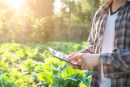 Agronoom gebruikend tabletcomputer op landbouwgebied en onderzoekend alvorens te oogsten. landbouw technologie concept.