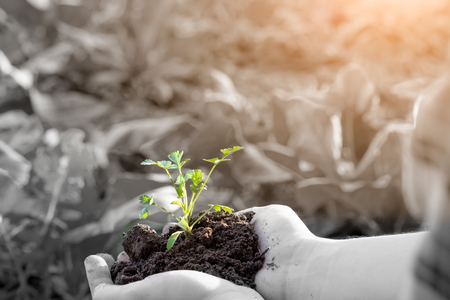 Farmer holding baby plant soil, male agronomist examining quality of fertile agricultural land, close up with selective focus Banque d'images