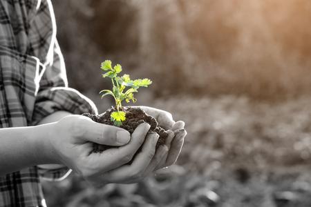 Granjero que sostiene el suelo de la planta del bebé, agrónomo de sexo masculino que examina calidad de la tierra agrícola fértil, cierre para arriba con el foco selectivo