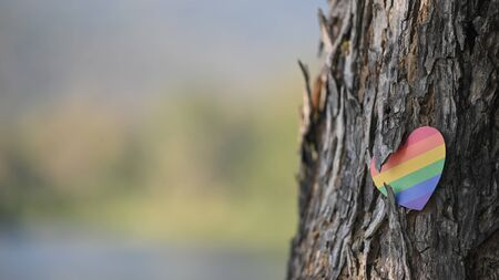 LGBT hearts symbol attached with bark of tree. LGBT happiness concept.