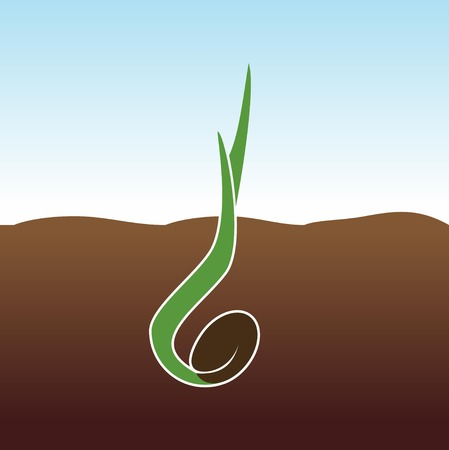 germination: Growing Plant. Sprout grows.
