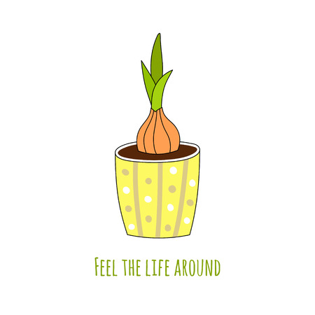 Bulbous houseplant in a hand-drawn style. Vector illustration.