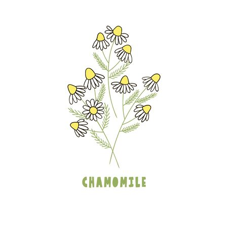 Delicate little bouquet of chamomile, isolated on white. Vector illustration. Illustration