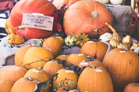 Orange halloween pumpkins Stock Photo