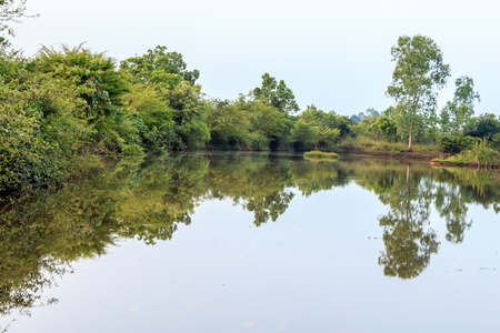 quiet of lagoon in the forest