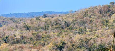 jungle landscape with mountain range Stock Photo