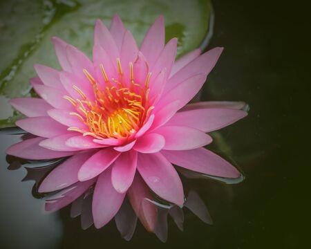 s flower water in full bloom