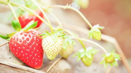 Close up strawberry in nature photo