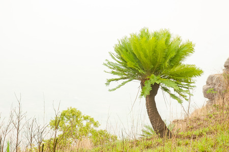 cycas: Cycads are growing on a cliff in the forest Stock Photo