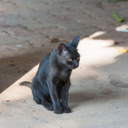 moggy: homeless dirty pity black cat sit on the paving Stock Photo