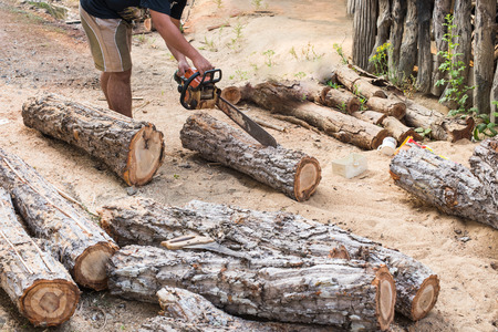 timber cutting: Timber cutting wood with  old saw, chainsaw and blade.