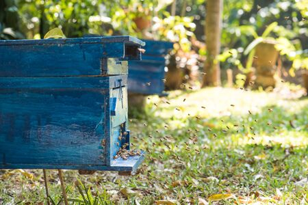 hardworking: hardworking bees on honeycomb in apiary