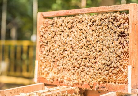 apiary: hardworking bees on honeycomb in apiary