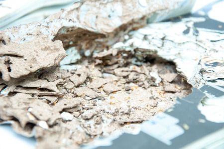 taxonomic: Close up damaged paper eaten by termite