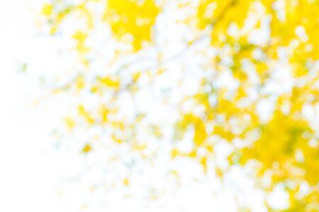 defocus: Photo by Lens defocus of Golden shower use as background.